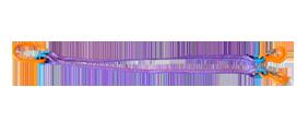 2СТ - Двухветвевой строп текстильный